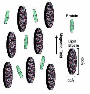 Bicelles